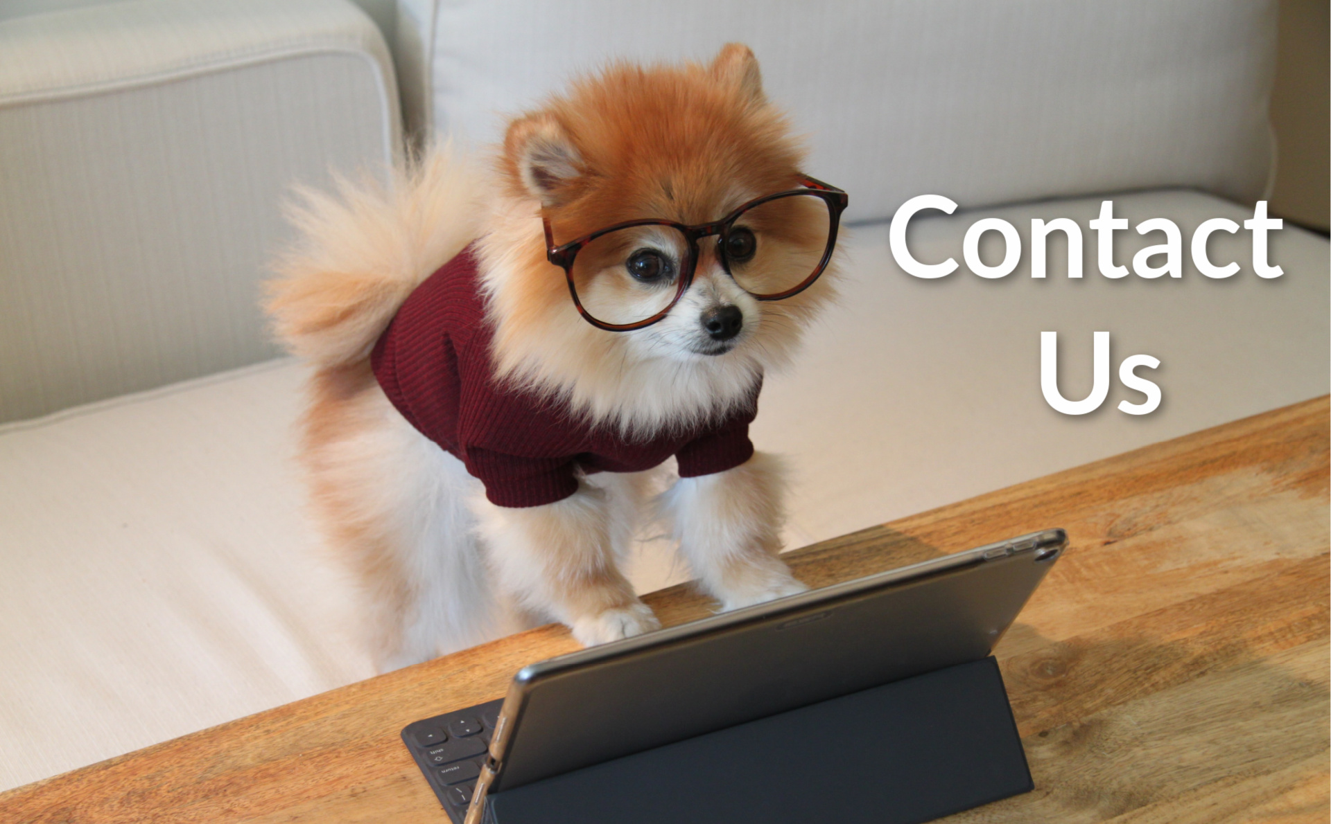 Pomeranian at computer