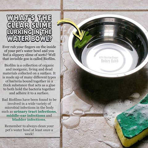 Slimy water bowl with explanation
