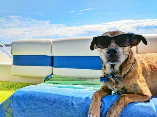 Dog wearing sunglasses outside