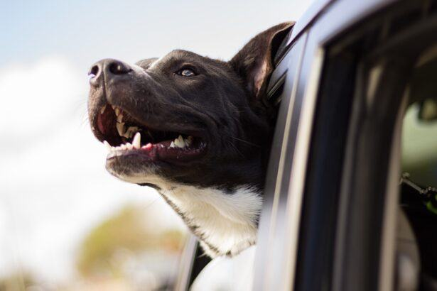 Happy dog hanging outside car window