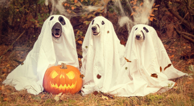 Dogs dressed as ghosts for Halloween