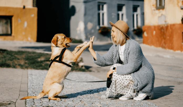 Dog and girl high-fiving