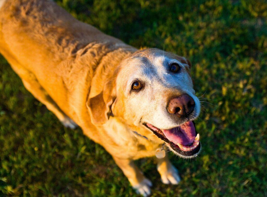 Senior dogs need special care