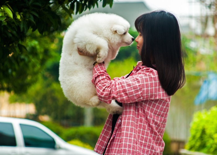 Girl holding fluffy white dog next to car