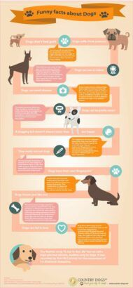 Funny Dog Facts Infographic