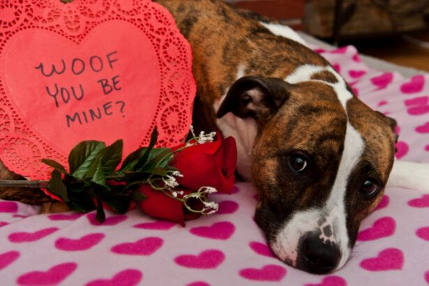 Cute dog with heart sign, woof you be my valentine