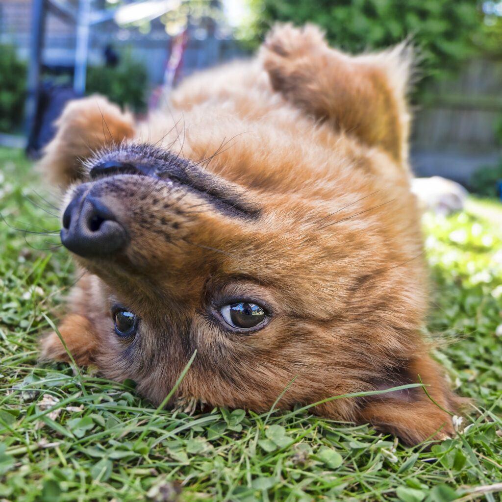 Cute dog upside down